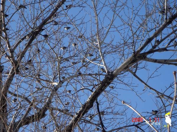太平鸟的日子,不怎么太平 - 后花园网文 - 趣味生活