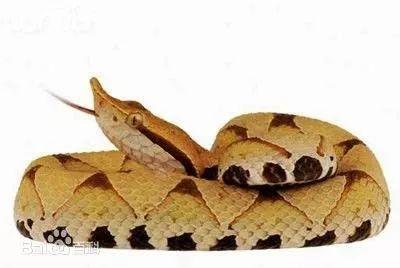 眼镜蛇 图源:视觉中国