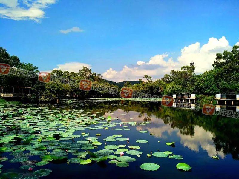 马山三甲乡村旅游区,小都百乡村旅游区等乡村旅游景点吸引了大批