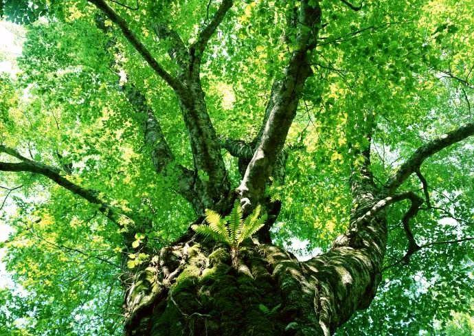 大片的绿色是我们可利用的最好背景,利用逆光的光线从树叶的缝隙露出