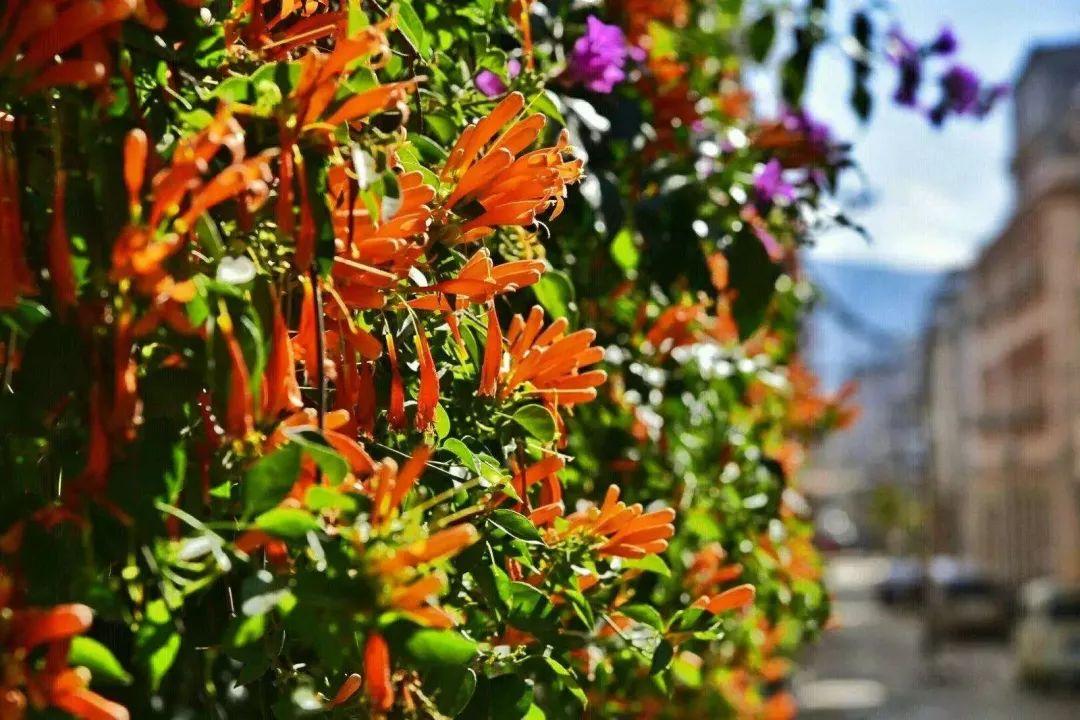 特色以现有的炮仗花,樱花,三角梅,凤凰木为主题,草花为铺设