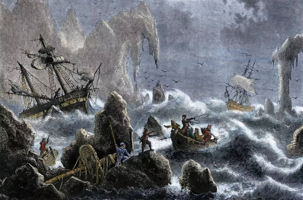 暗冠蓝鸦,北海狮,大海牛等北极动物以及……海獭.