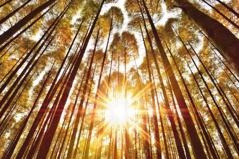 重庆秋天独有的色彩            穿透杉林的光   时而直接豪放   有