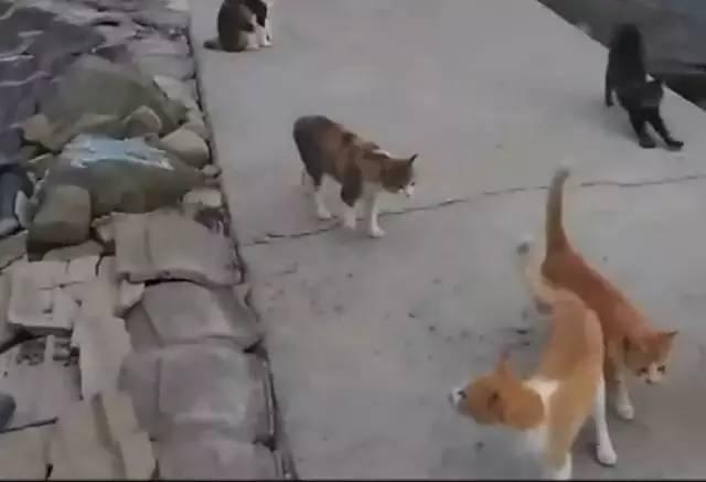 老人的葬礼,突然出现了许多的猫狗,原来 - 后花园网文 - 趣味生活