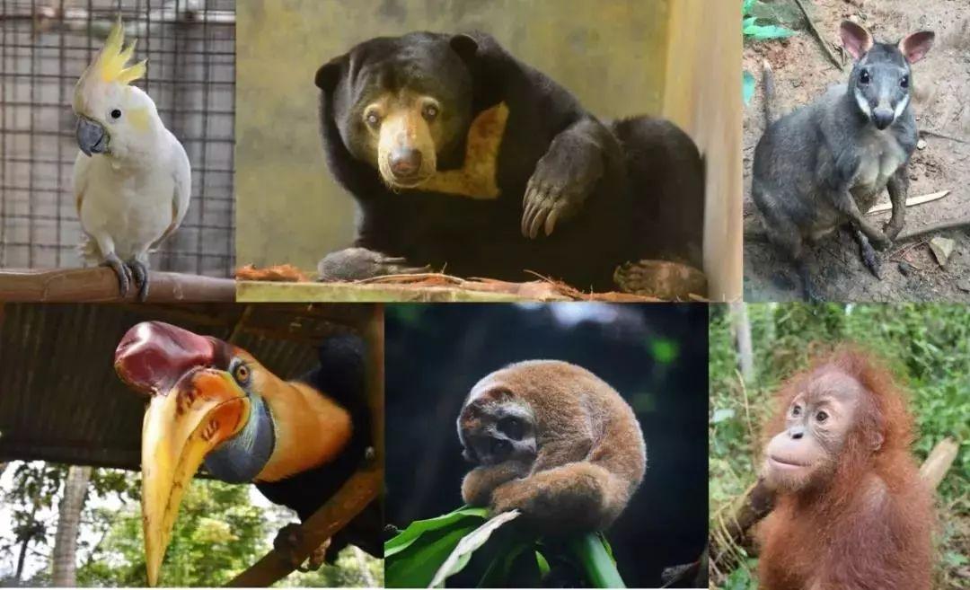 锡卡南嘉野生动物救援中心救助的动物.
