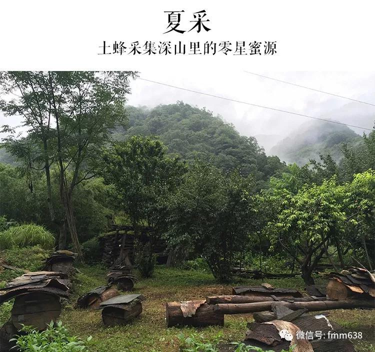 秦岭深山农家土蜂蜜,坚持沿用古法圆木