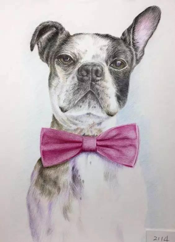 英国画家他笔下的彩铅动物   细腻而富有质