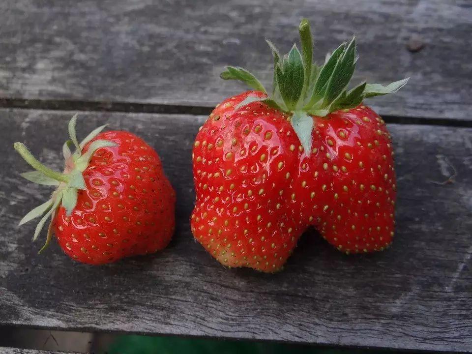 草莓到底要怎么洗? - 老泉 - 把酒临风的博客