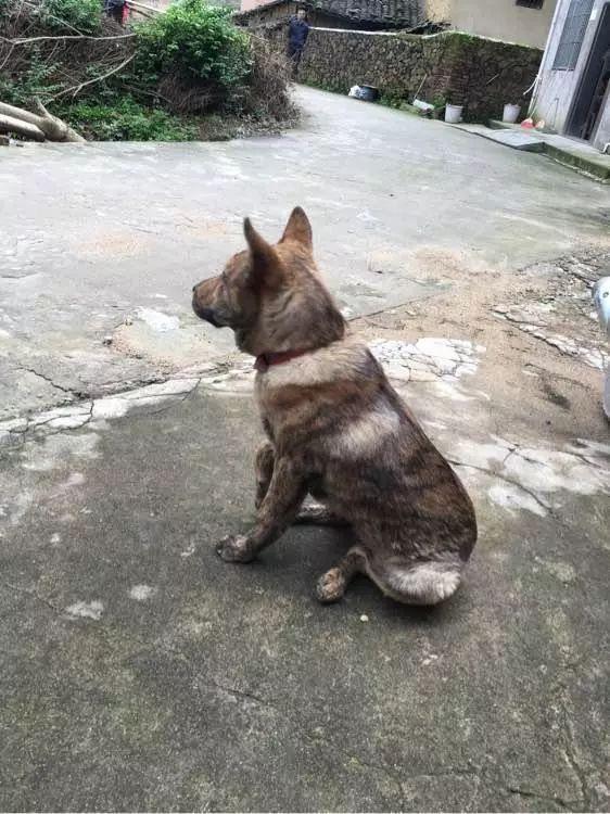 主人错怪爱犬,想跟它道歉时,没想到狗狗的表现…… - 后花园网文 - 趣味生活
