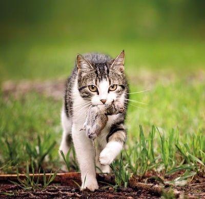 人类对于猫的喜爱,造就了世界上最成功的寄生虫 - 老泉 - 把酒临风的博客