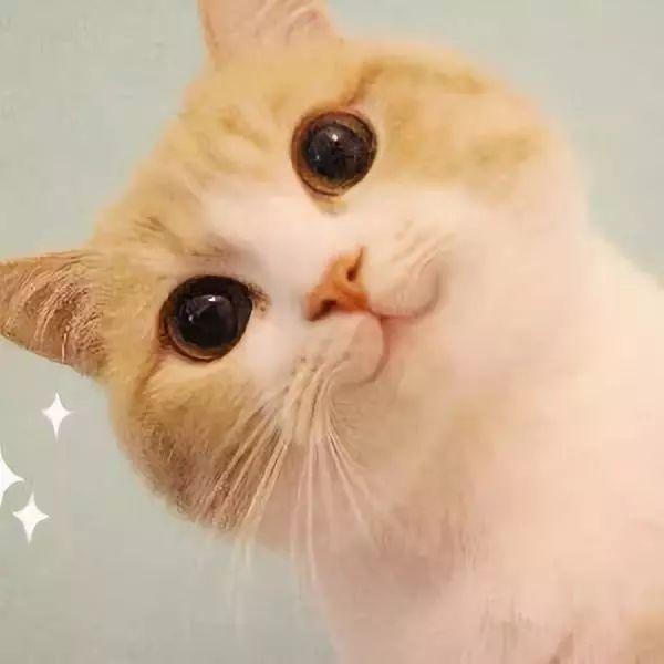 """所以,准确来说,每位猫主子的""""喵喵""""声的含义都是不同的.图片"""