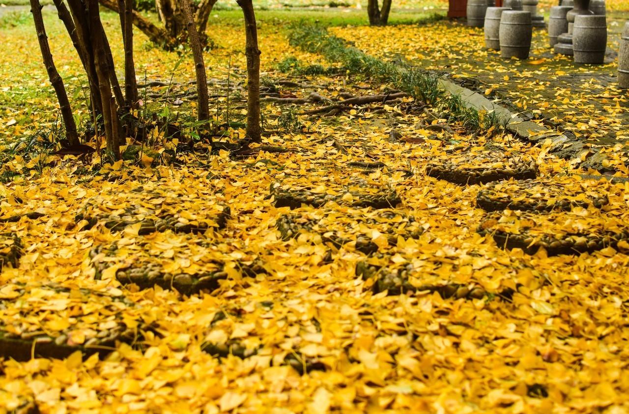 落叶的风景与爱情图