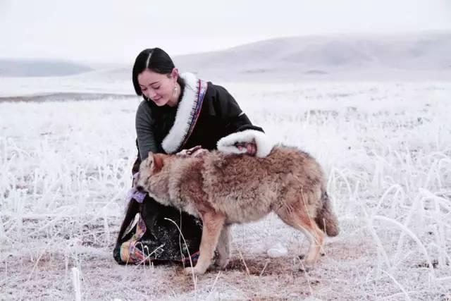 超感人!她养大一匹狼, 送它重返狼群, 4年后他们重逢了.图片