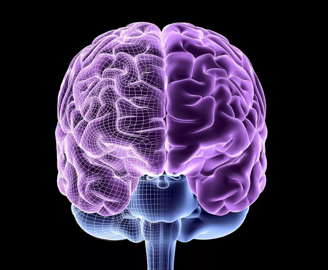 大脑三维结构图及功能