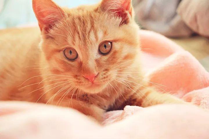 小猫落水步骤图