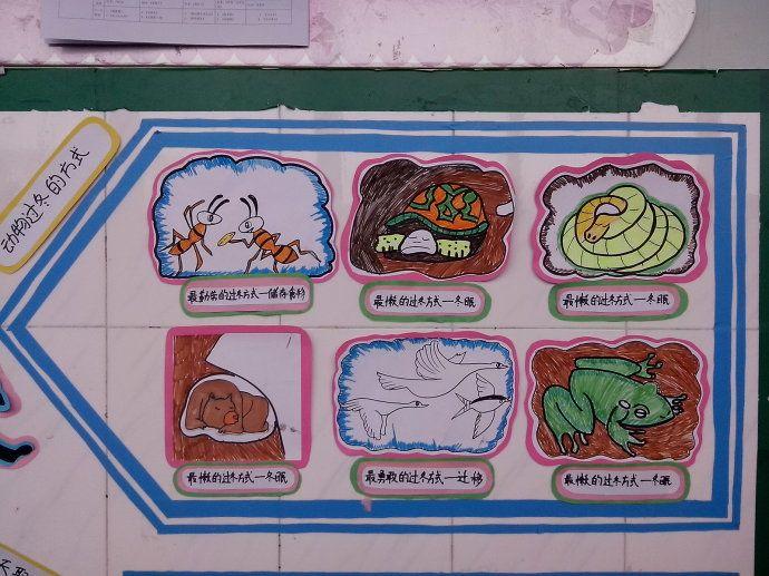 画作布置),动物的的过冬方式(用幼儿画作布置),冬天取暖的方法(用幼儿