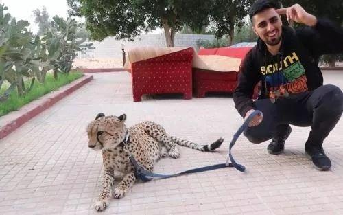 迪拜的生活虽然发达,但也不是你们想象的那样呀,又不是动物园谁