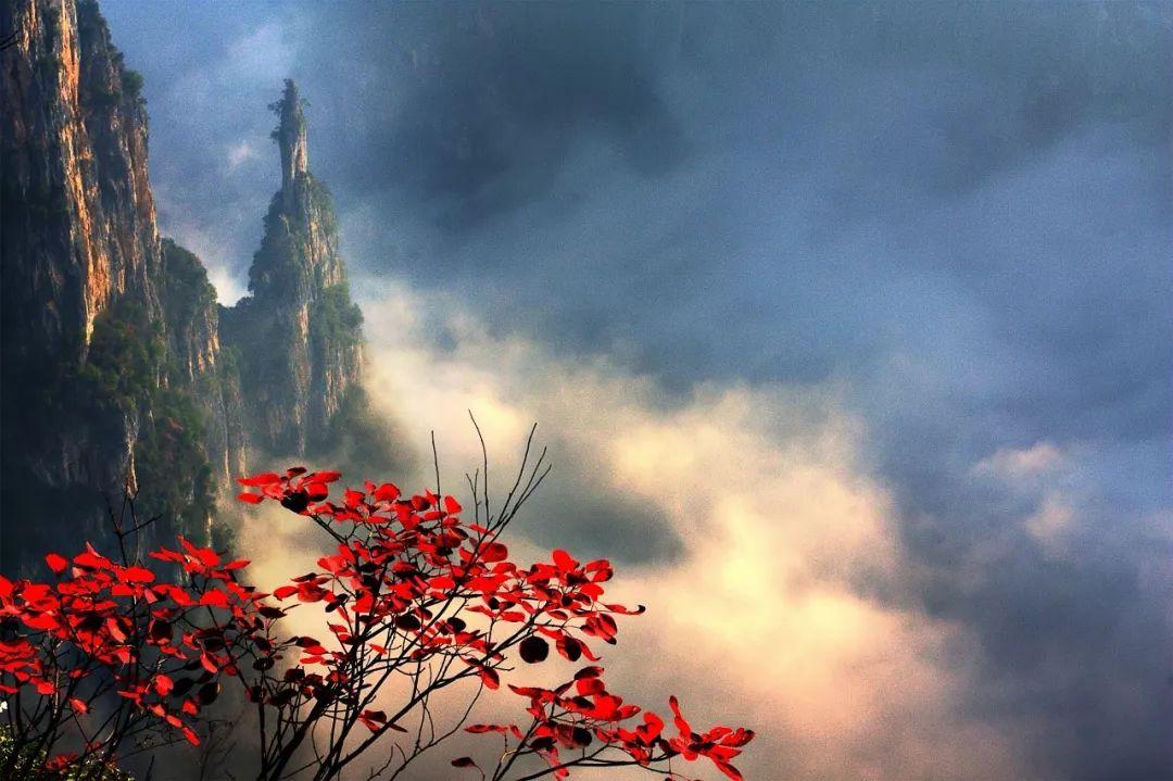 巫山红叶火了!第12届长江三峡(巫山)图片国际视频工具红叶图片