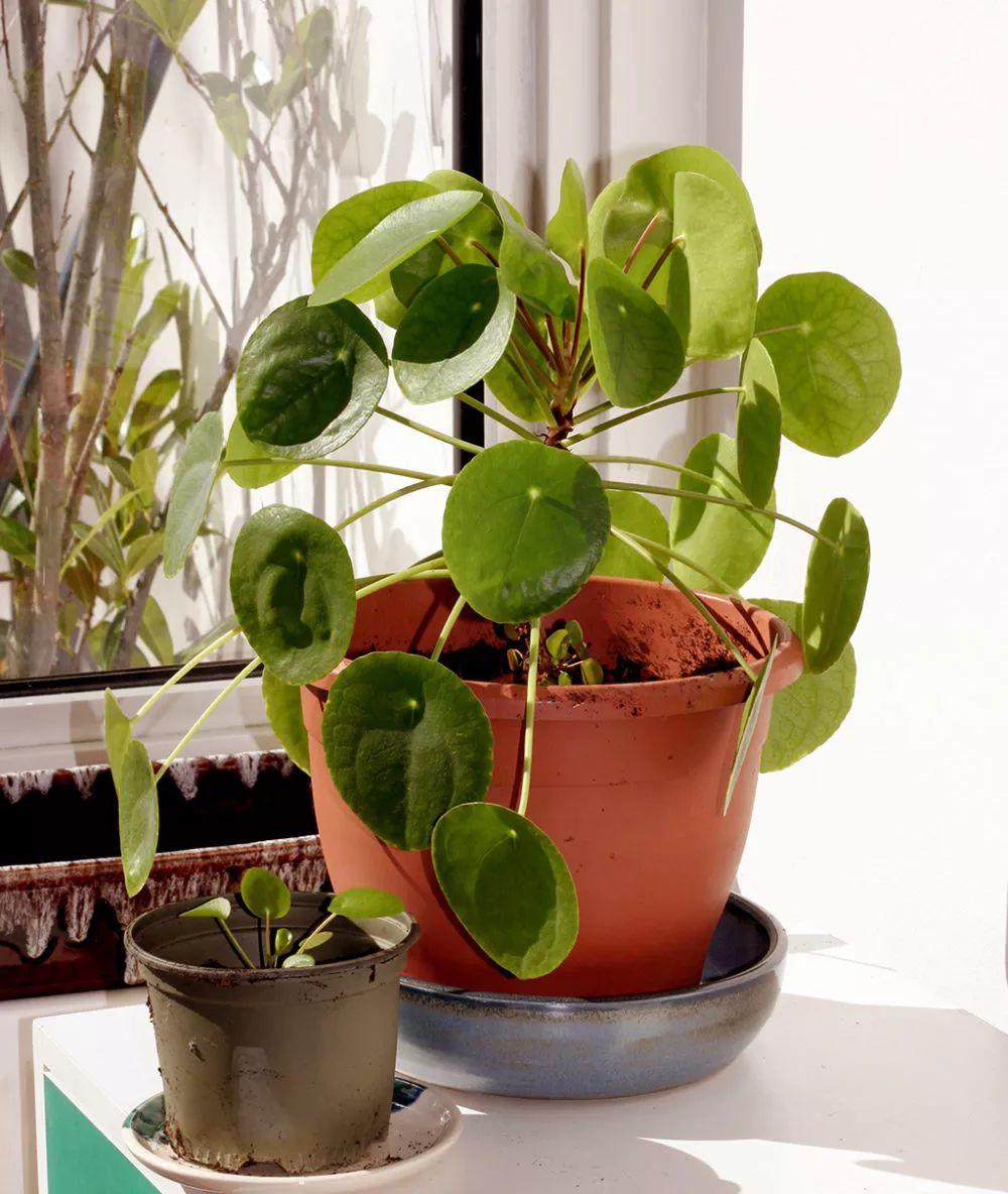 10件ins网红植物,花小钱拯救你乏味的家