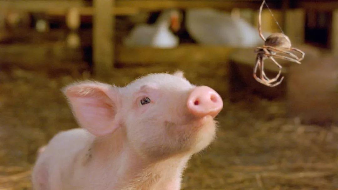 说起可爱的小猪,我们一定会联想到   东坡肘子,梅菜扣肉,红烧狮子头