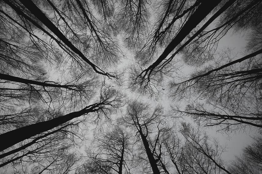 不仅人会恭谦让,树也有树的礼仪 - 老泉 - 把酒临风的博客