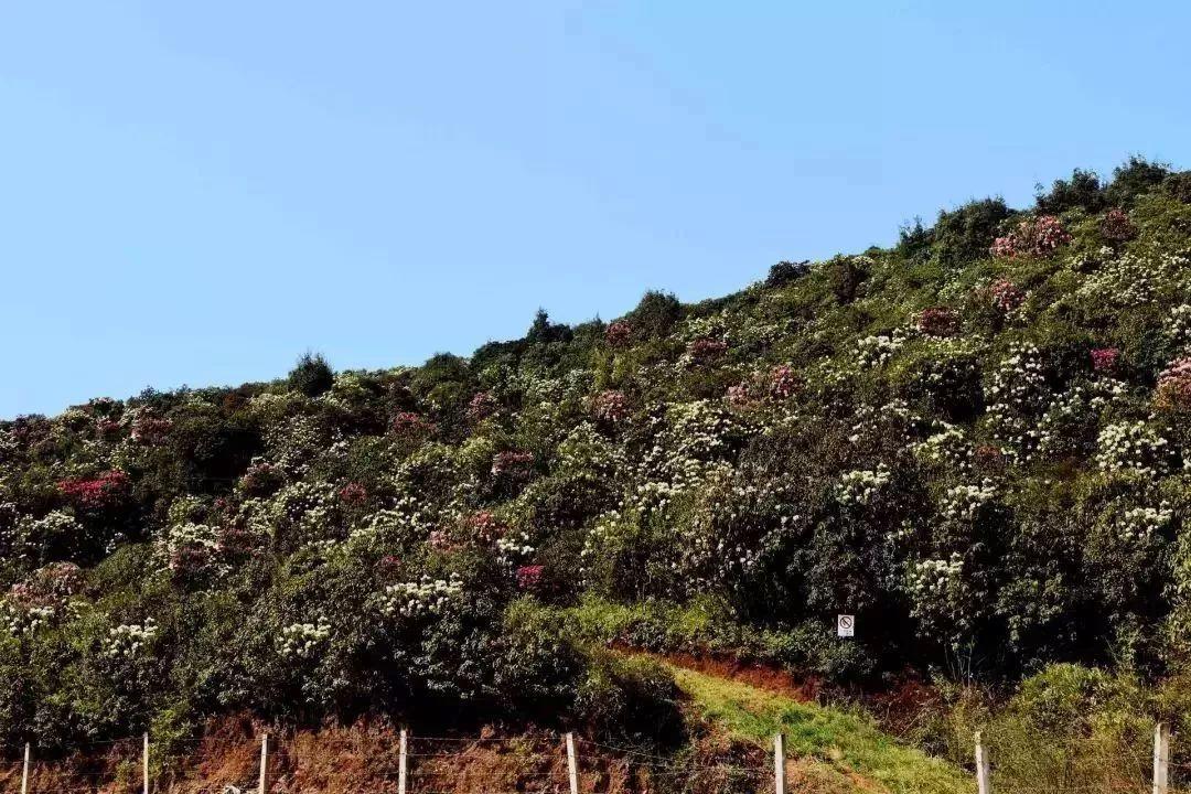 克依黑風景區位于曲靖麒麟區東南60km的東山鎮克依黑村委會,景區