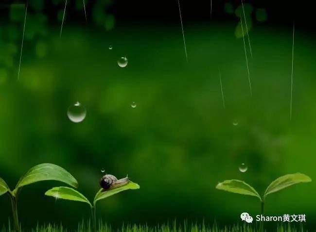 【Sharon口语轻课堂】雅思口语:天气的表达