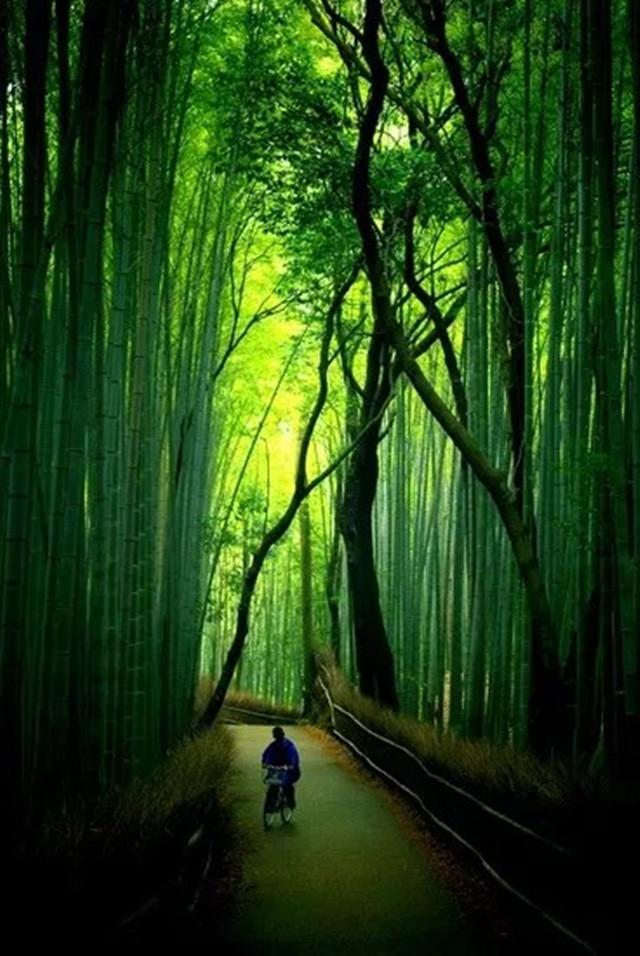 壁纸 风景 森林 植物 桌面 640_956 竖版 竖屏 手机