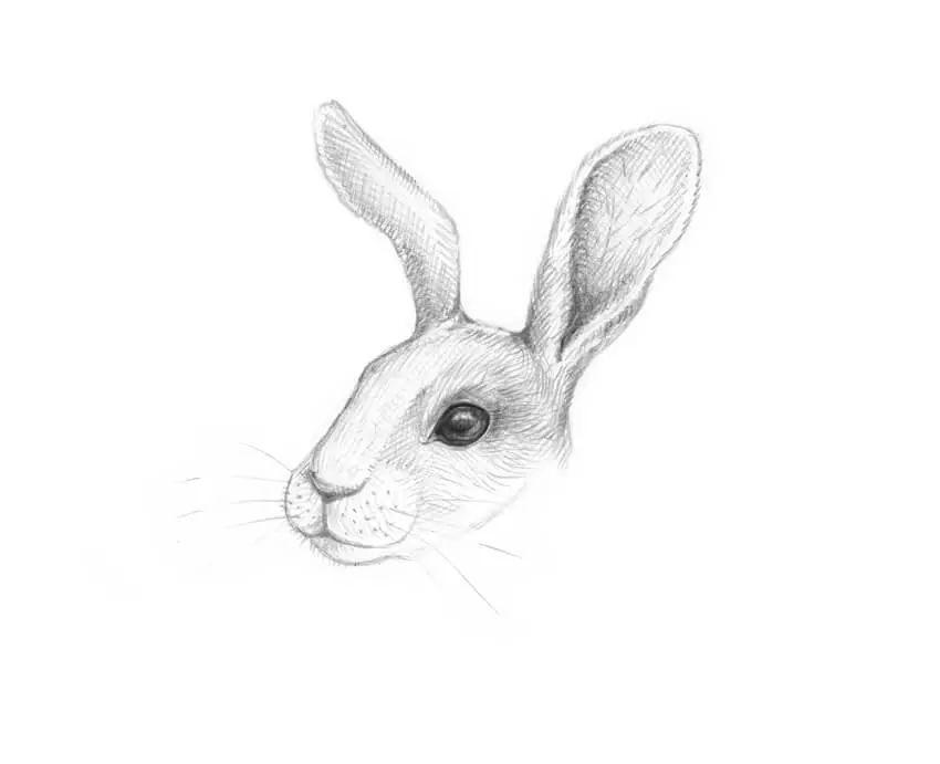 【绘画小课堂】如何逐步绘制兔,素描基础教程.