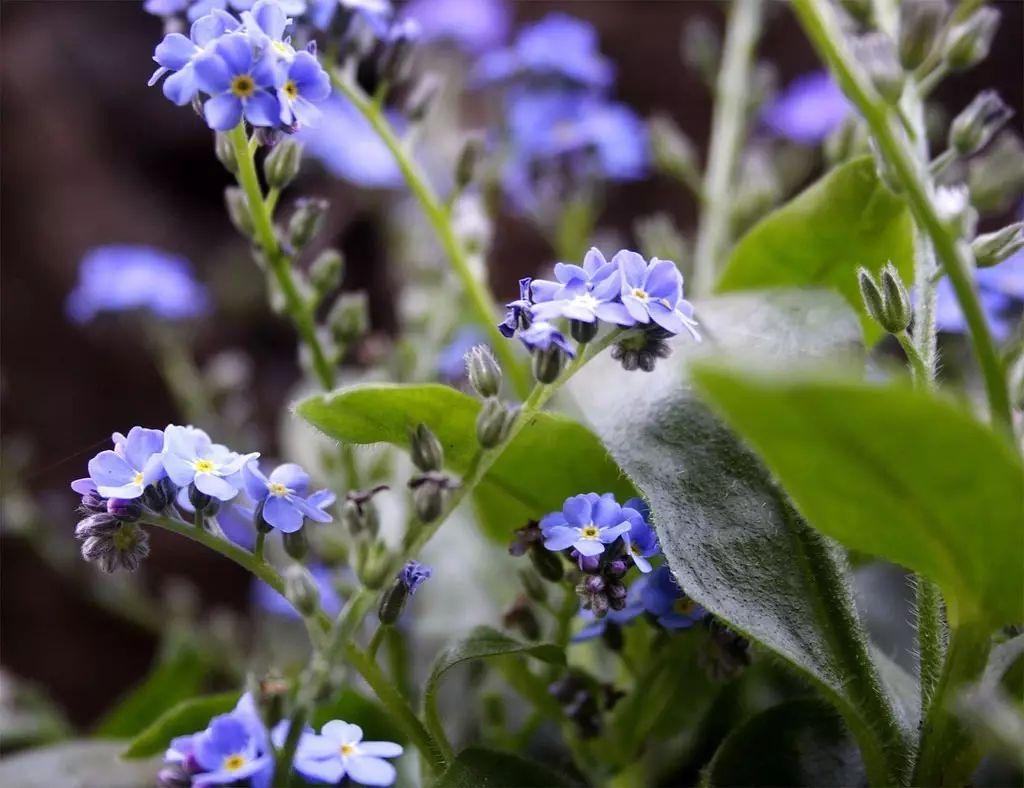 """我们仍未知道那天所看见的花名叫""""勿忘我"""" - 后花园网文 - 趣味生活"""
