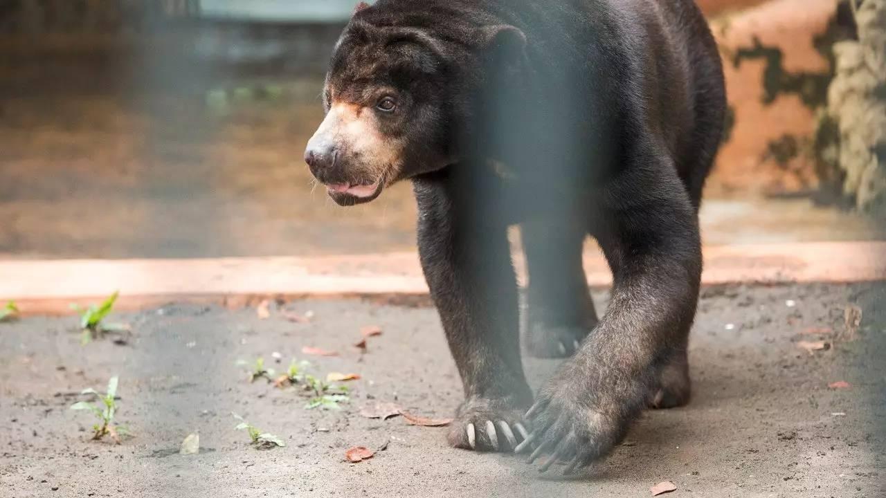 无论是中国动物园的规章制度,还是发达国家动物园的规矩,饲养员