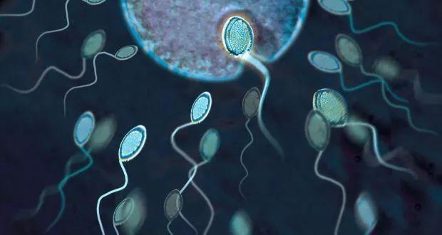 《自然》子刊:科學家首次證實,啪啪啪前的環境溫度會刻在精子裡,影響後代的健康!溫度越低,後代越不容易吃胖 | 科學大發現