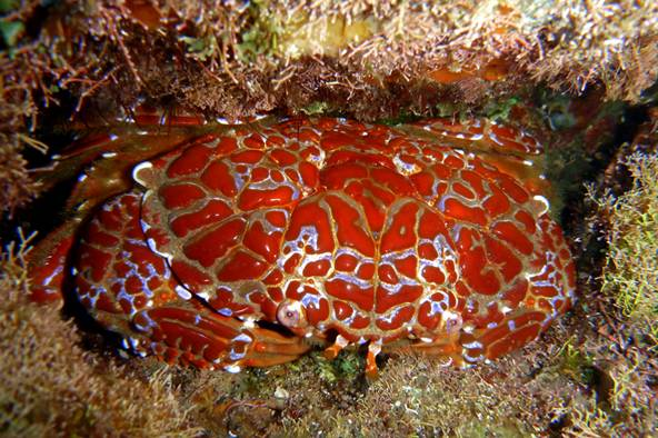 谁说只有煮熟的螃蟹才是红色的? - 老泉 - 把酒临风的博客