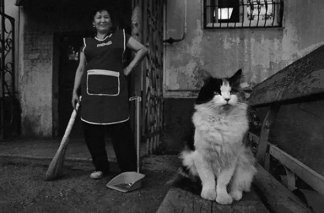 她拍了12年流浪貓,每一張都刺痛人們的心
