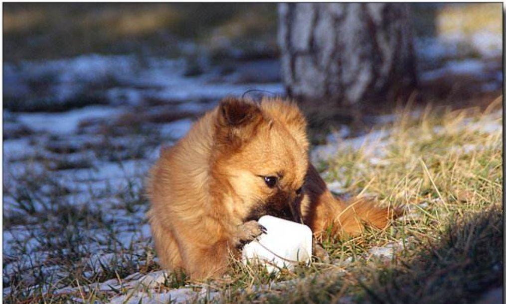 社会上关于流浪动物特别是流浪狗,   争议一直没断过,   各种声音此