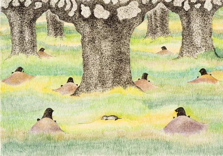 干货 | 这是鼹鼠一家的温馨故事,也是一套有关自然教育的桥梁书