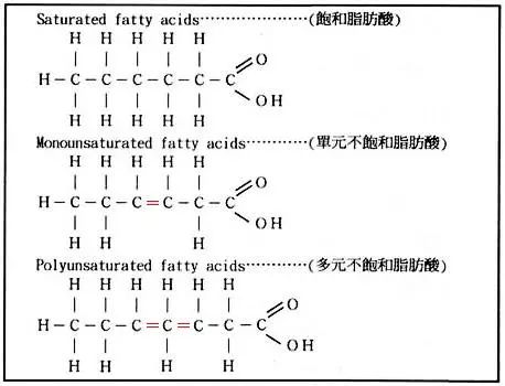 脂肪酸的结构    单不饱和脂肪酸:脂肪酸分子中有一个双键.