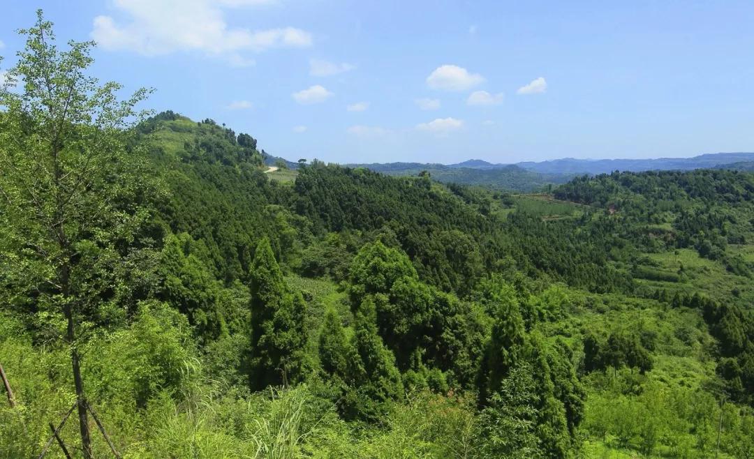 成都龙泉山城市森林公园建设工作推进现场会在龙泉驿区召开