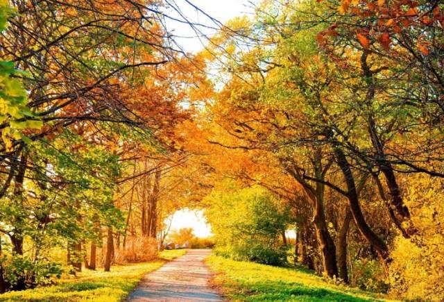 北宫国家森林公园位于丰台区长辛店镇,有1800亩红叶,11月将出现