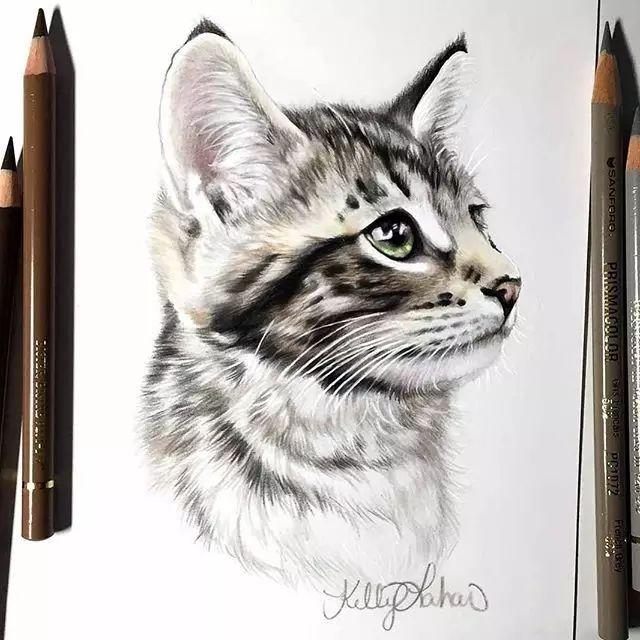 彩铅素描猫步骤