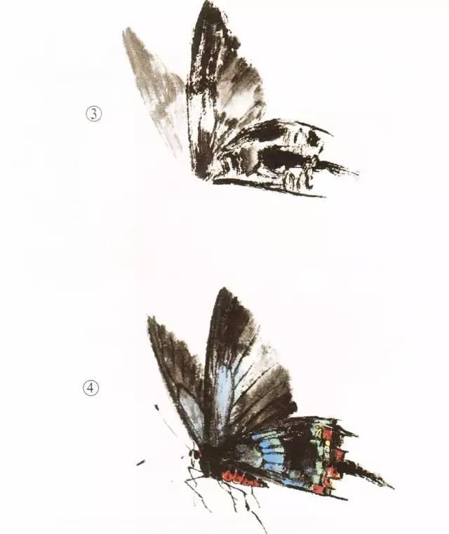 精彩教程回顾:蝴蝶的工笔及写意画法